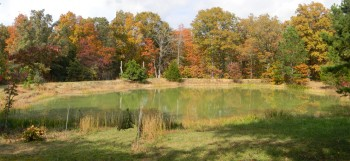 pond-fall-banner