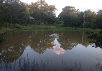 pond-summer