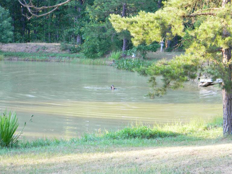 Pond Scenes